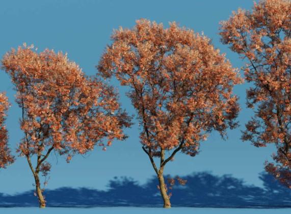 The Grove genera árboles para Blender, actualización de la herramienta basada en Blender para generar modelos biológicamente plausibles.