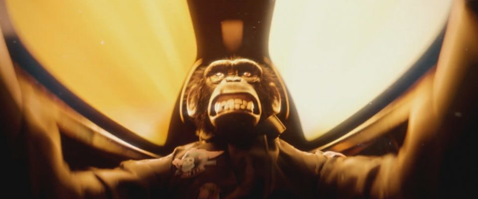 Un chimpancé a 650 kilómetros por hora